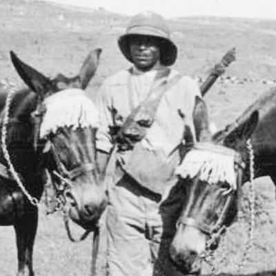 Private Charles Bailey and mules, Macedonia 1916. From the website greatwartales.home.blog