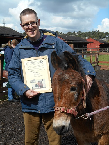 Redwings adoption mule Muffin receives his honorary membership certificate from Robin Braysher, SCS Web Editor, on his birthday in April 2016.