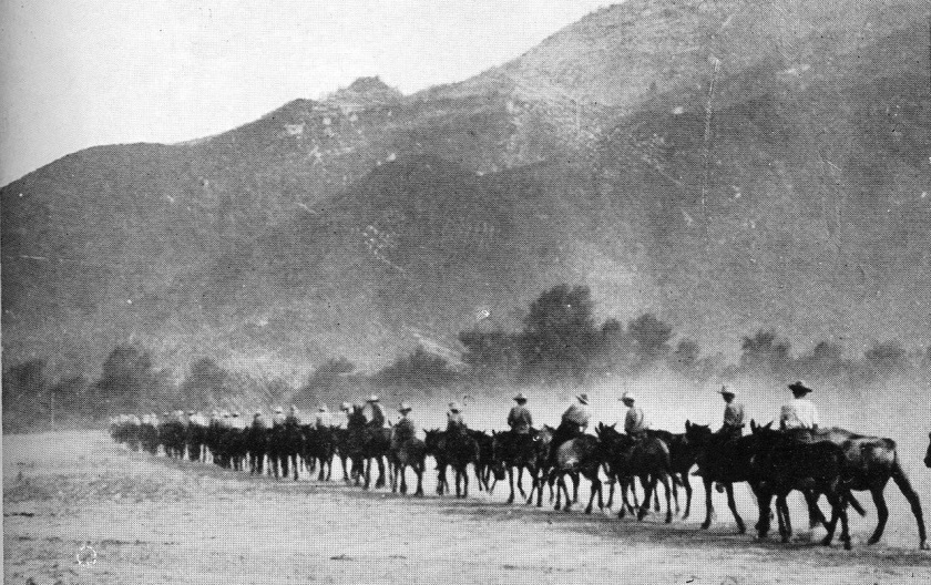 A photograph of a column of mules with a background of mountains, so depicting two of the three 'Ms' of the campaign in Macedonia: 'Mules' and 'Mountains'; the third 'M' was 'Mosquitoes', which carried 'Malaria'. From an official photograph.