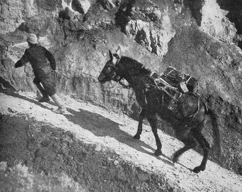 Image of a muleteer and pack mule from 'The Story of the Salonica Army' by G. Ward Price (1918). The caption reads: The steep tracks up which all ammunition, supplies and water have to be carried to much of our front line (Official photograph).