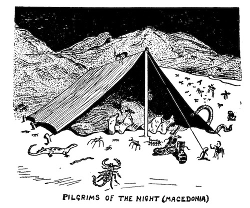 A cartoon from 'The Mosquito' showing various creepy-crawlies encountered by members of the BSF